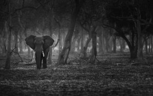 The Lonely Tusker, 2014