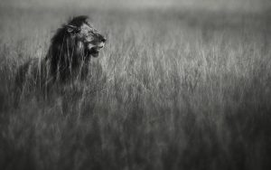 Mara Lion, 2012